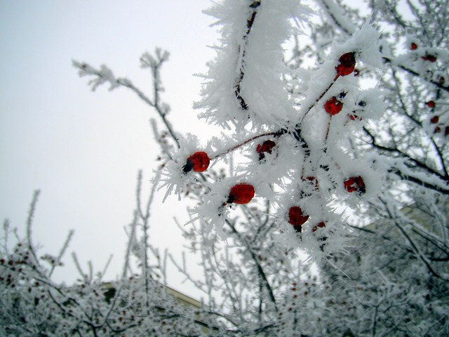 Це не сніг - це бинти на крові...