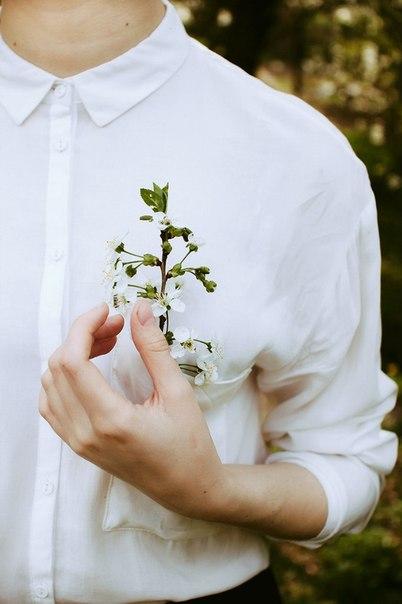 Окутай вишневим цвітом...