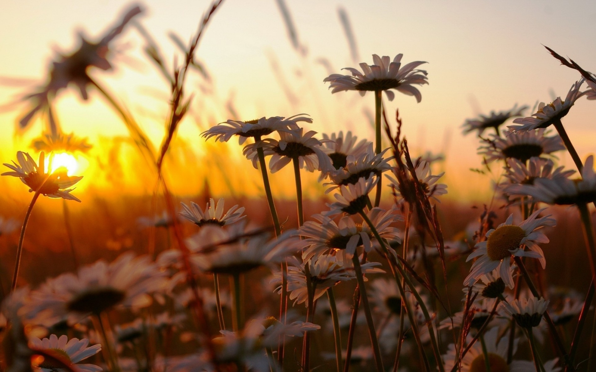 Вдихаю ранком свіжість літніх днів...