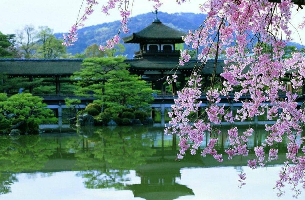 В Кіото сакура цвіте