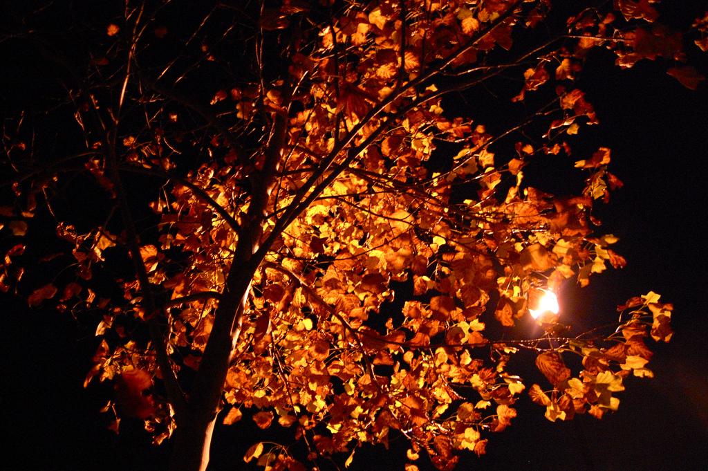 У ліхтарях скінчилася весна…