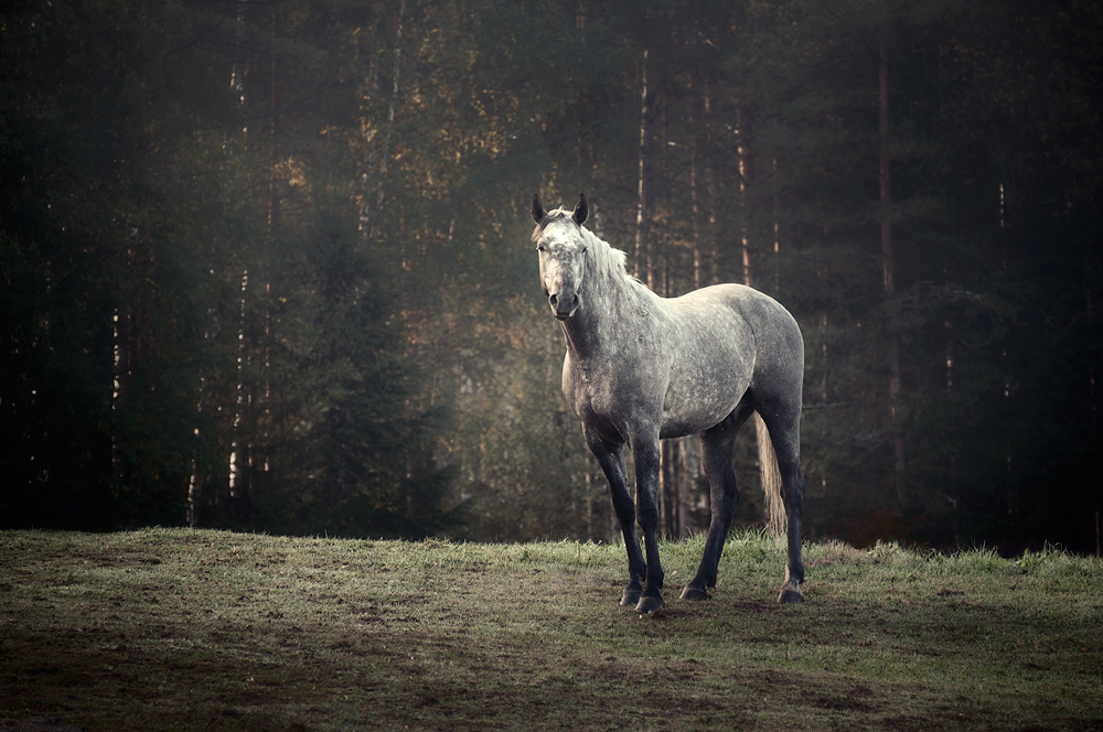 Пасеться кінь.
