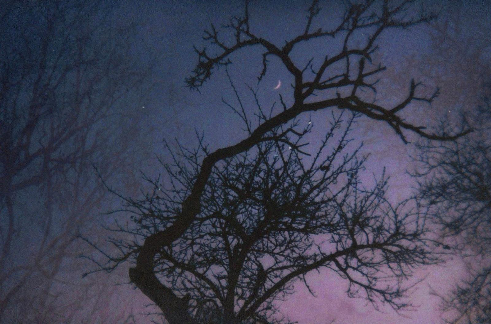 я літатиму довго над лісом осіннім